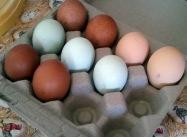 9 eggs
